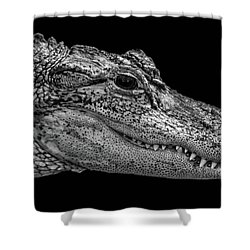 From The Series I Am Gator Number 9 Shower Curtain