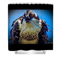 From The Series The Osprey Number 3 Shower Curtain