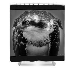 From The Series The Osprey Number Two Shower Curtain