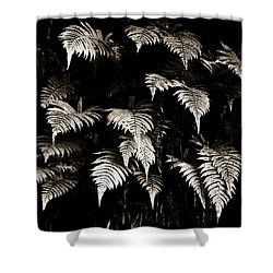 Fronds Shower Curtain by Marilyn Hunt