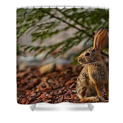 Shower Curtain featuring the photograph Frontyard Bunny by Dan McManus