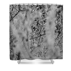 Frost 2 Shower Curtain by Antonio Romero