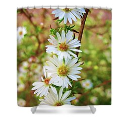 Frost Aster Shower Curtain