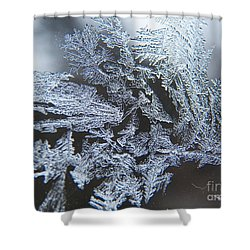 Frost Branches Shower Curtain