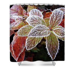 Shower Curtain featuring the photograph Frost Cluster by Betsy Zimmerli