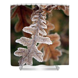 Frost Covered Oak Leaf Shower Curtain