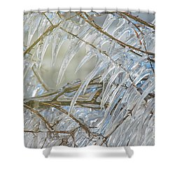 Shower Curtain featuring the photograph Frostbite.. by Nina Stavlund