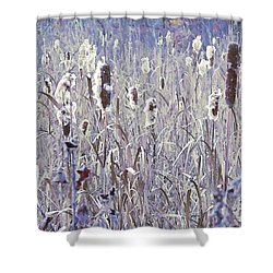 Frosted Cattails In The Morning Light Shower Curtain
