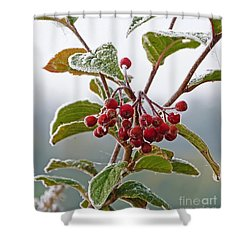 Frosted Cotoneaster Shower Curtain
