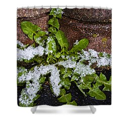 Frosted Dandelion Leaves Shower Curtain