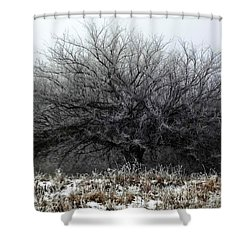 Shower Curtain featuring the photograph Frosted Elm by Shelli Fitzpatrick