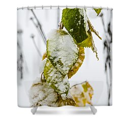 Frosted Green And Yellow Shower Curtain