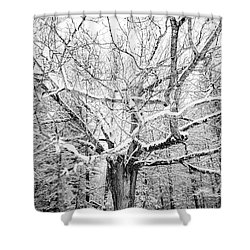Shower Curtain featuring the photograph Frosted by Kendall McKernon