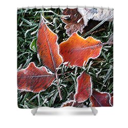 Frosted Leaves Shower Curtain by Shari Jardina