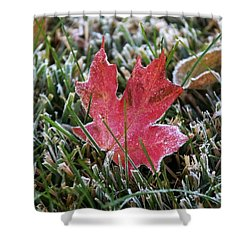 Frosted Maple Leaf  Shower Curtain