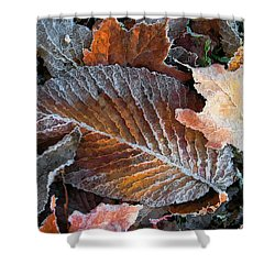Frosted Painted Leaves Shower Curtain by Shari Jardina