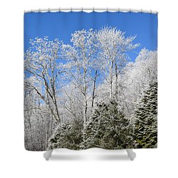 Frosted Trees Blue Sky 1 Shower Curtain