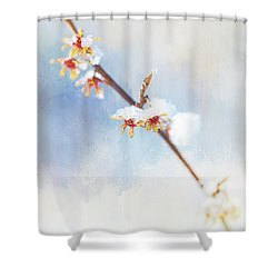Frosted Witch Hazel Blossoms  Shower Curtain