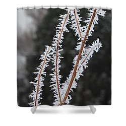 Frosty Branches Shower Curtain by Carol Groenen