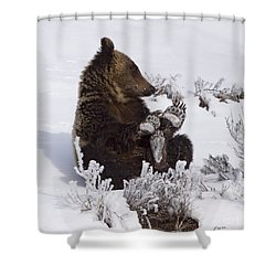 Frosty Feet-signed Shower Curtain