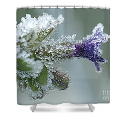 Frosty Flower Shower Curtain