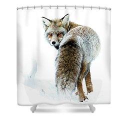 Frosty Fox Shower Curtain