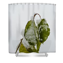 Frosty Green Leaves Shower Curtain