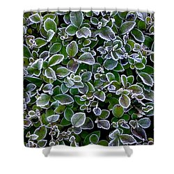 Frosty Hedgerow Shower Curtain