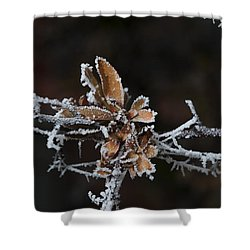 Shower Curtain featuring the photograph Frosty Leaves by Karen Slagle