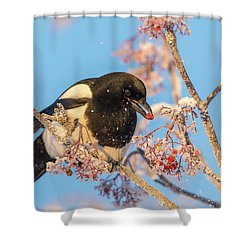 Frosty Magpie Shower Curtain