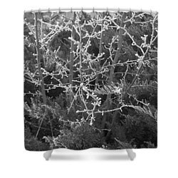 Shower Curtain featuring the photograph Frosty Morning # 3 by Antonio Romero