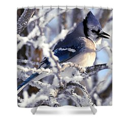 Frosty Morning Blue Jay Shower Curtain