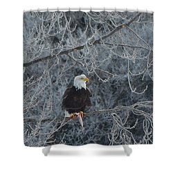 Frosty Morning Eagle Shower Curtain