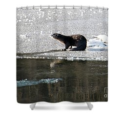 Frosty River Otter  Shower Curtain by Mike Dawson