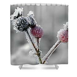 Frozen Buds Shower Curtain by Inge Riis McDonald
