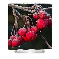 Frosted Apples Shower Curtain