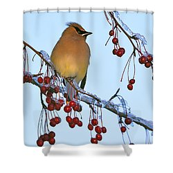 Frozen Dinner  Shower Curtain by Tony Beck