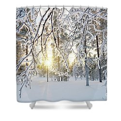 Shower Curtain featuring the photograph Frozen Trees by Delphimages Photo Creations