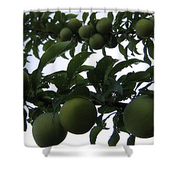 Fruit And Sky_raindrops Shower Curtain by Barbara Yearty