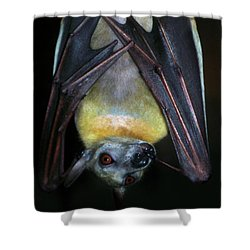 Shower Curtain featuring the photograph Fruit Bat by Anthony Jones