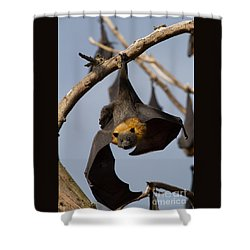 Fruit Bat Hanging Shower Curtain by Craig Dingle