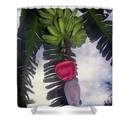 Fruitful Beauty Shower Curtain by Karen Wiles
