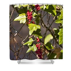 Shower Curtain featuring the photograph Fruits Of Autumn by Joan Bertucci