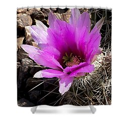 Shower Curtain featuring the photograph Fuchsia Cactus Blossom by Phyllis Denton