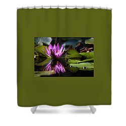 Shower Curtain featuring the photograph Fuchsia Dreams by Suzanne Gaff