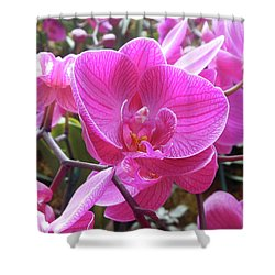 Fuchsia Flower Field Shower Curtain