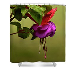 Fuchsia Fuchsia Shower Curtain