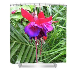 Shower Curtain featuring the photograph Fuchsia by Mary Ellen Frazee