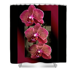 Fuchsia Orchids Oof Shower Curtain