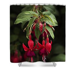 Fuchsia Twins Shower Curtain